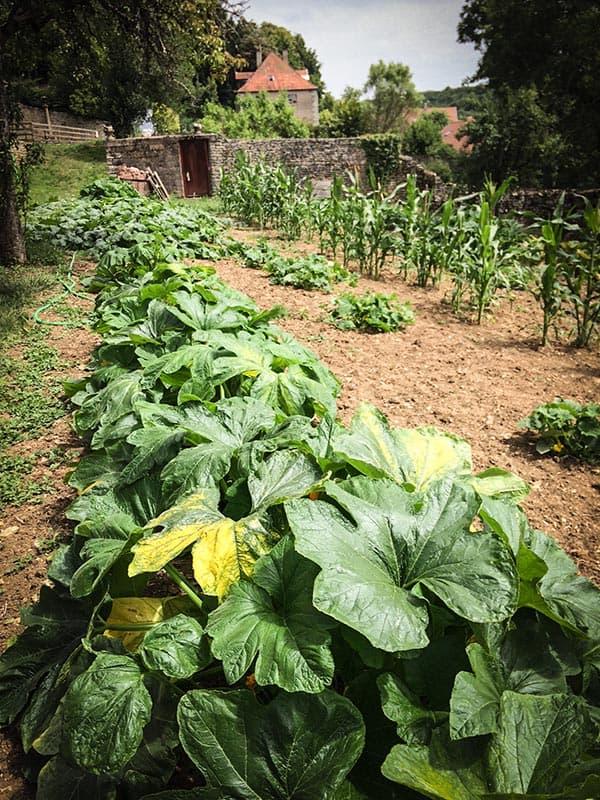 Jardin Potager Cohons